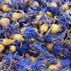 Dry Cornflower flower